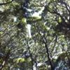 土地が見つかりません(3):出雲市の空き家バンクを活用 して土地探し。田舎らしい空