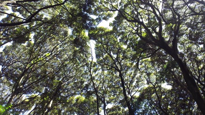 森の中のイメージ