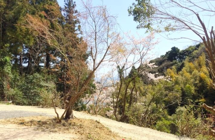 桜🌸も花咲き命の息吹を感じる庭