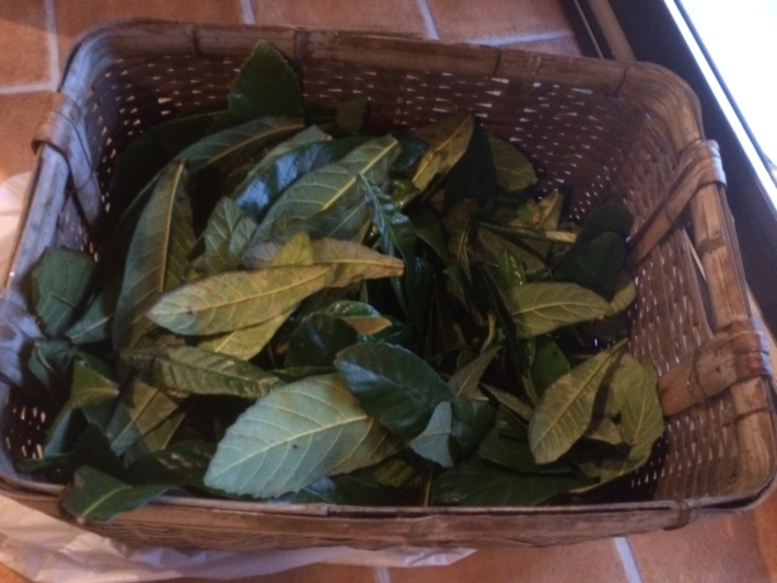 カゴいっぱいの洗われた枇杷の葉