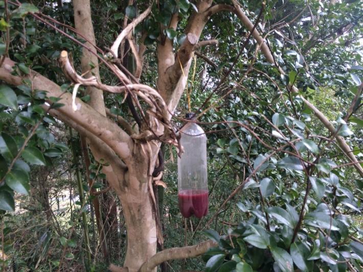 木に吊るされたトラップ