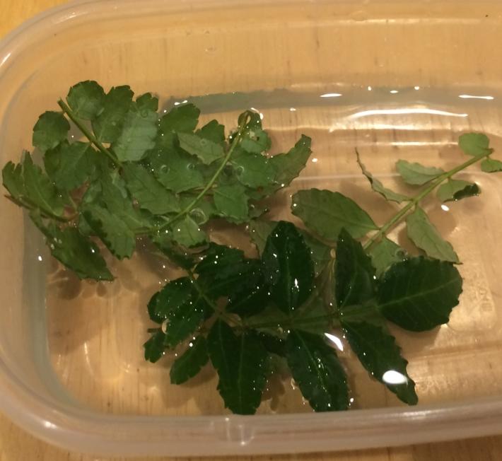 水に葉をつけ汚れを取り除きます