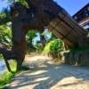 松江城下町の塩見縄手はふらりとお散歩をおすすめ。武家屋敷だけではない魅力を満喫で