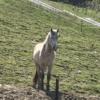 親切料金設定。島根県雲南市の乗馬体験スポット『さくらおろち牧場』は初心者にもおす