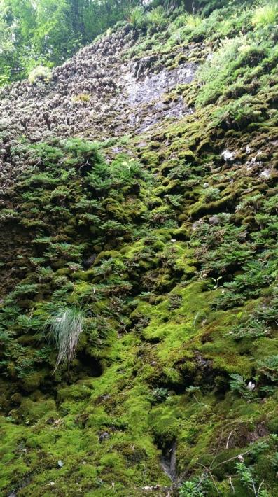 遊歩道から望む立久恵峡の五百羅漢