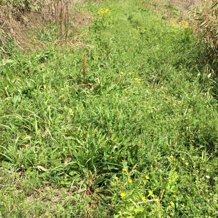 春の野の草種