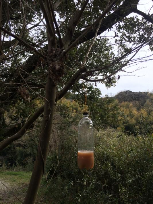 枝に吊るされたハチトラップ