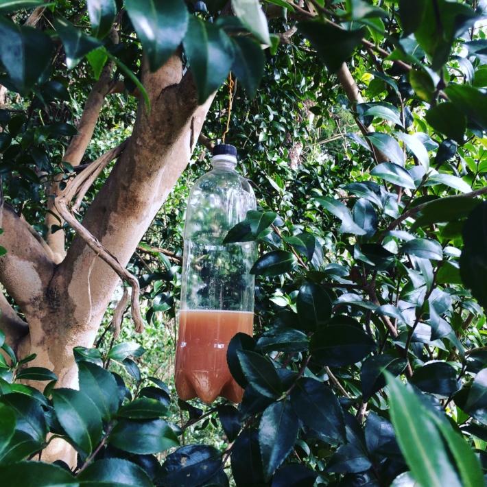 木陰に仕掛けられたハチトラップ