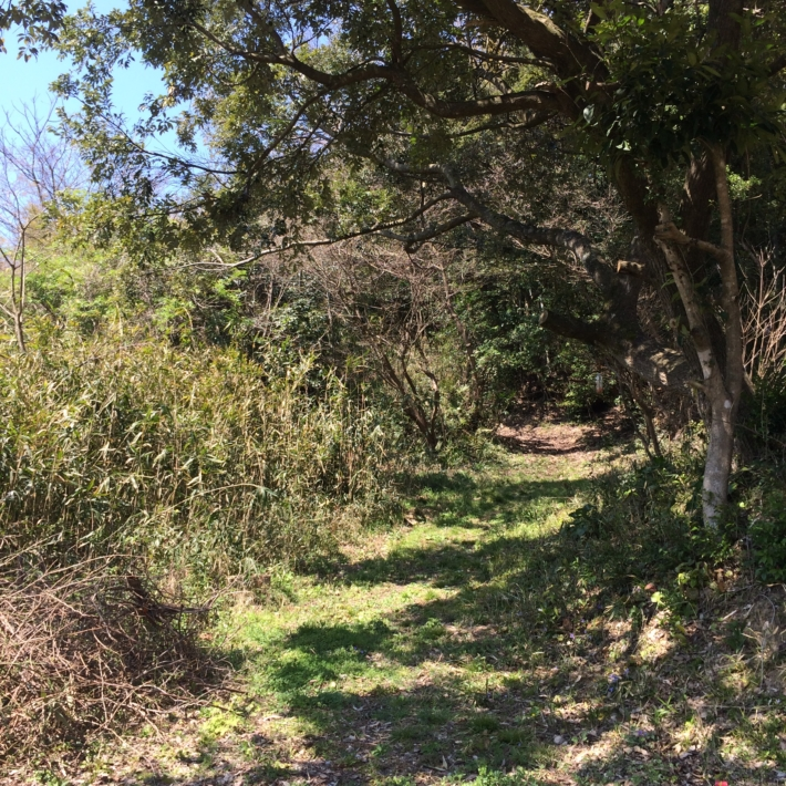 森へ続く庭の小道