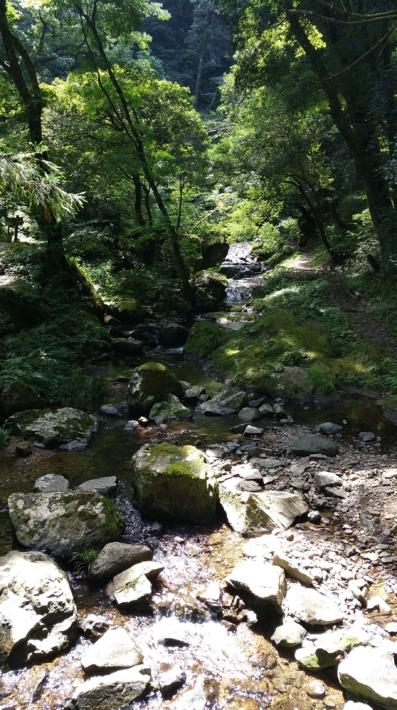 龍頭が滝遊歩道の清流の風景