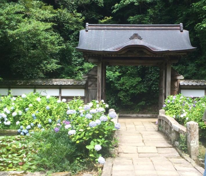 月照寺【紫陽花の咲き誇る】