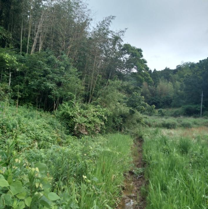 左が竹林。深く長い溝で竹林との間を遮る。