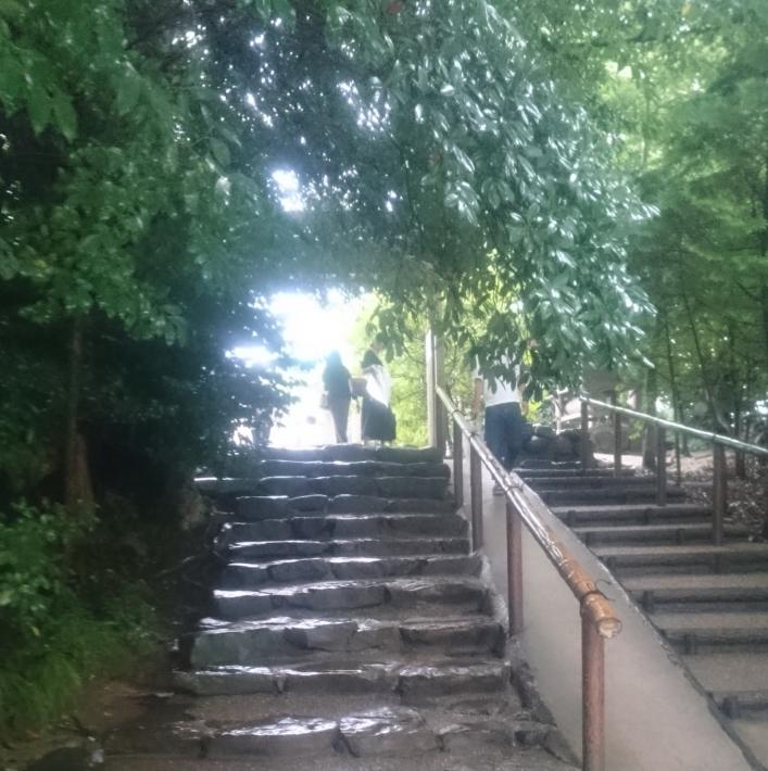 木が覆いかぶさった石階段