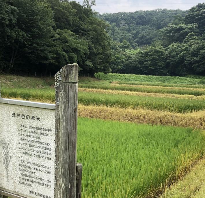 荒神谷史跡公園内・古代米を育てている農耕地