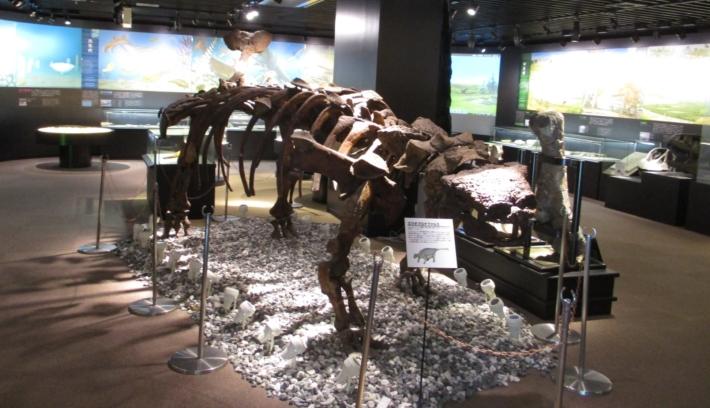 奥出雲多根自然博物館・迫力満点!【エウオプロケファルスの全身骨格模型】