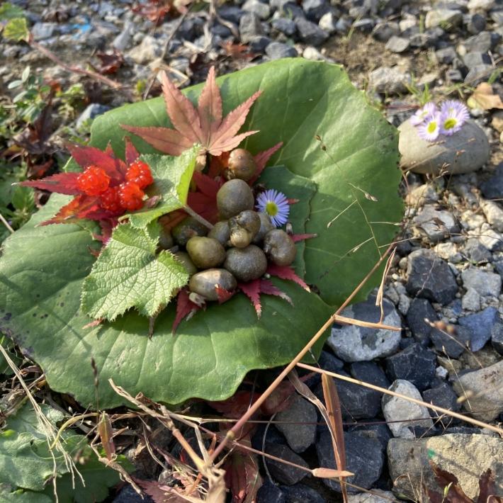 むかごに冬いちご紅葉のごちそう